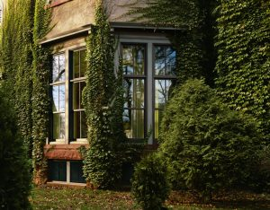 window installation Springfield
